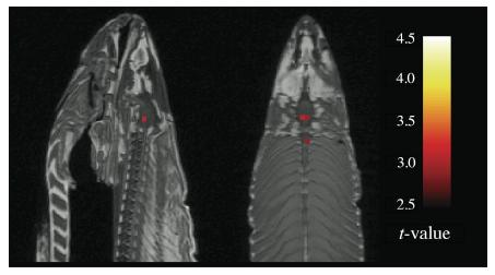 fMRI Gets Slap in the Face with a Dead Fish - Neuroskeptic