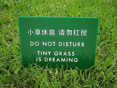 GrassDreaming.jpeg